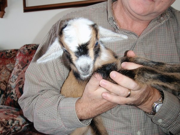 Big_goat_with_Dad.jpg