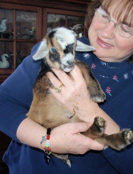 Big_goat_with_Mom.jpg