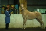 View the album Past Horse Shows (2009?)